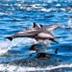 Dolphin Magic In Baja