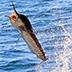 Spring Baja Fishing Report