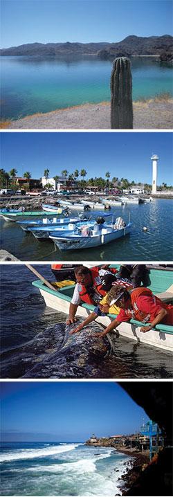 Baja Bound April Newsletter